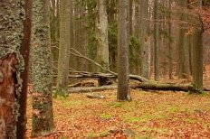 Blanský les